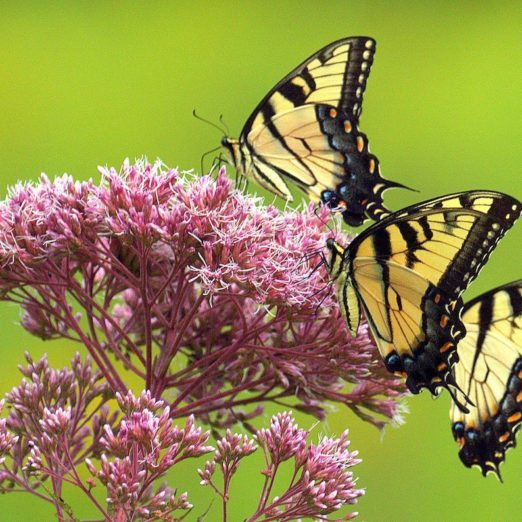 6 Go-To Flowers You Should Plant in Your Butterfly Garden