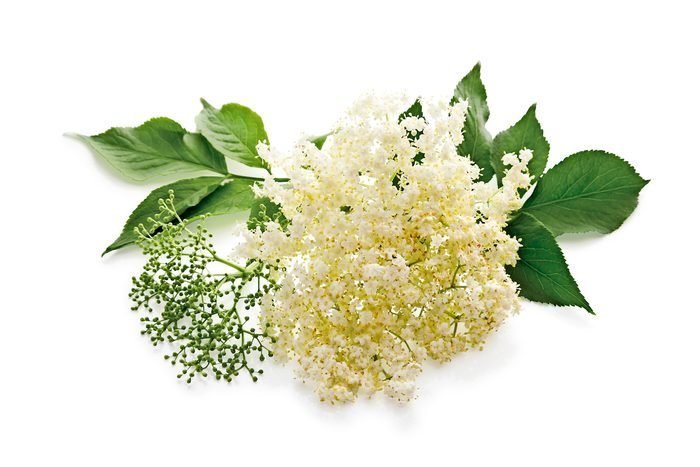 A close-up of an elderberry flower and leaves.