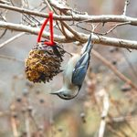 How to Make a Pine Cone Bird Feeder