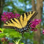 Pollinator Magnet: How to Care for and Prune Butterfly Bush