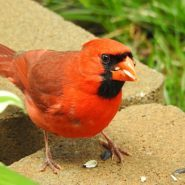 The Best Bird Feeders and Birdseed for Cardinals
