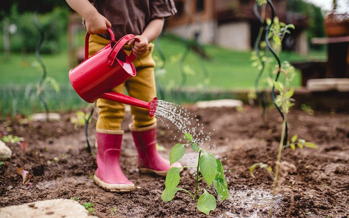 A little toddler in the garden, watering plants with can.