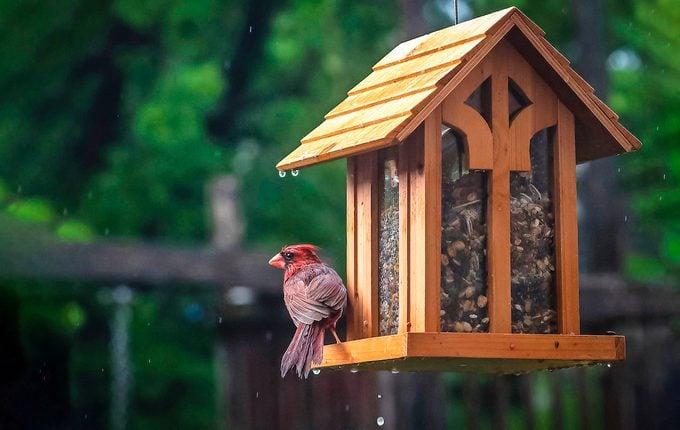 cardinal at a hopper feeder