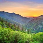 Explore the Great Smoky Mountains to See Birds and Wildlife