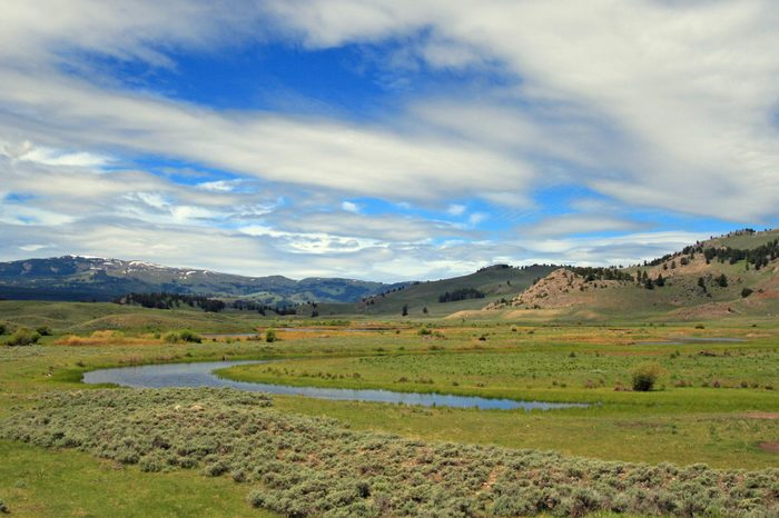 View of Slough Creek (wolf habitat) under lenticular and cumulus clouds in the Lamar Valley of Yellowstone National Park in Wyoming USA