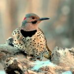 Can You Guess the Official State Bird of All 50 States?