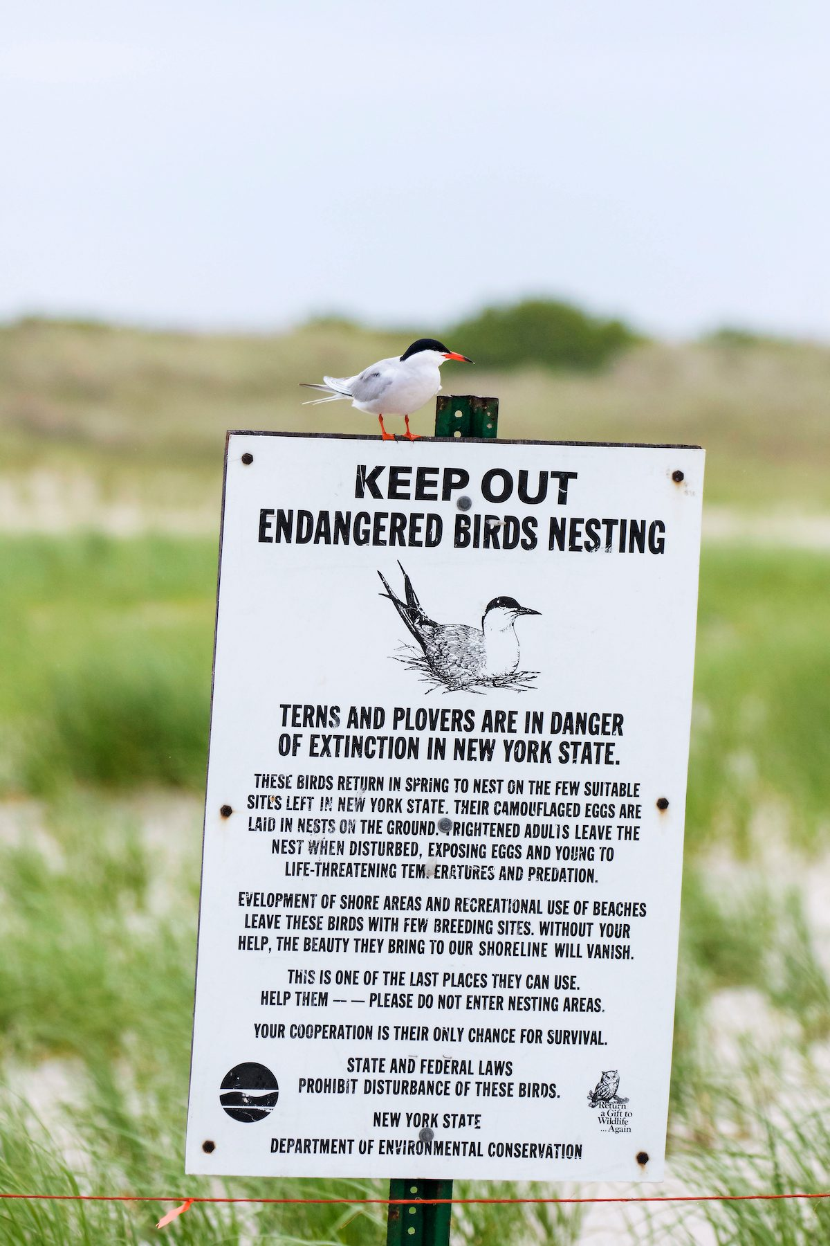 Sign with alert about nesting birds