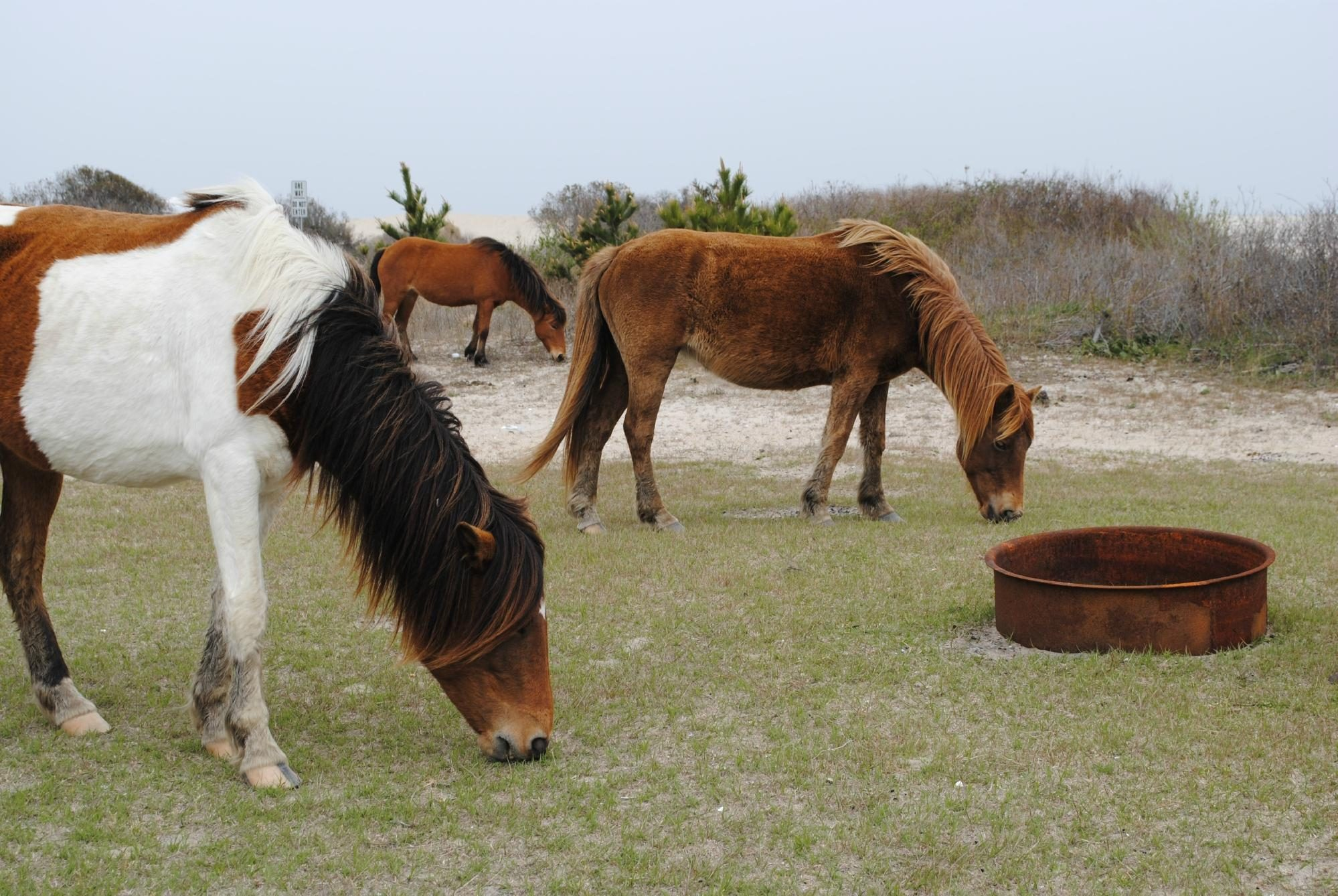 Maryland: Assateague State Park