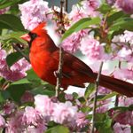 Plant Native Trees That Attract Birds