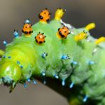 Quiz: How Many Types of Caterpillars Can You Identify?