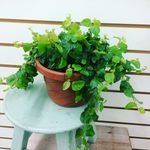 The Perfect Houseplant for You, Based on Your Zodiac Sign