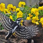 11 Types of Woodpeckers Birders Should Know