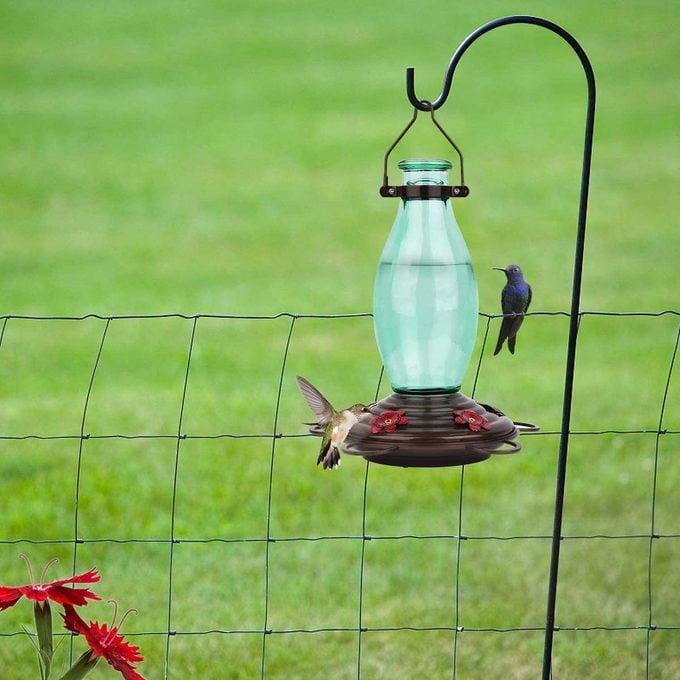 edison bulb hummingbird feeder