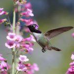 6 Tips for Growing a Drought-Tolerant Garden