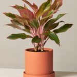 Plant Parents Will Love These Limited Edition Houseplants