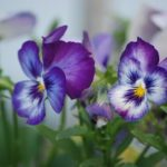 Edible Flowers: What Kind of Flowers Can You Eat?