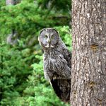 15 Outstanding Pictures of Owls