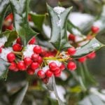 What Plants Should Gardeners Water in Winter?