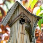 Keep Yellow Jacket Nests Out of Birdhouses Without Using Pesticides