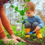 Expert Tips for Late Season Gardening