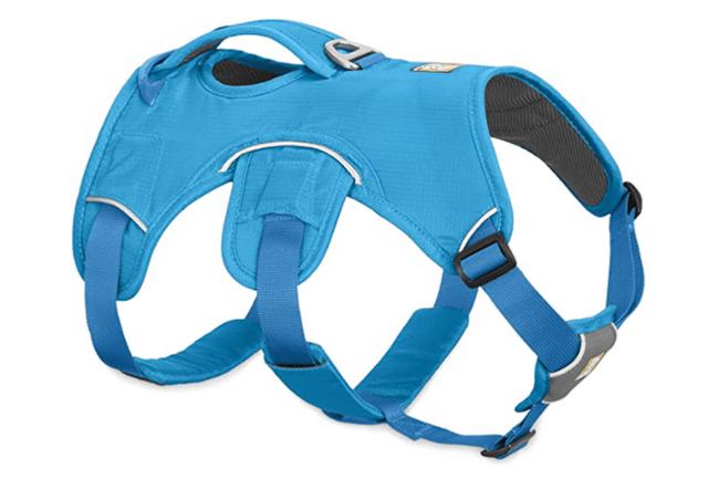 Blue dog harness