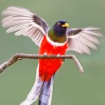 The Top 9 Most Beautiful Birds in America