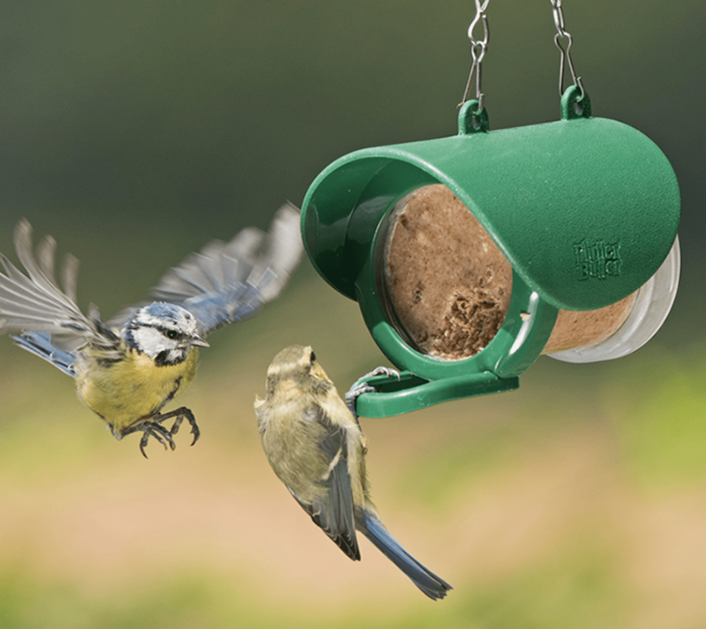 Two birds at a peanut butter feeder.