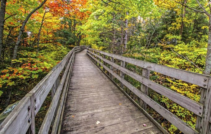 Boardwalk along a trail in the Hiawatha National Forest located in the Upper Peninsula of Michigan