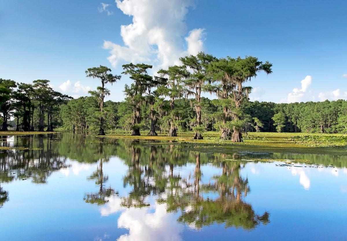 piney woods in Texas