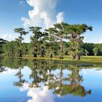 Explore the Piney Woods and Rose Capital of America in East Texas