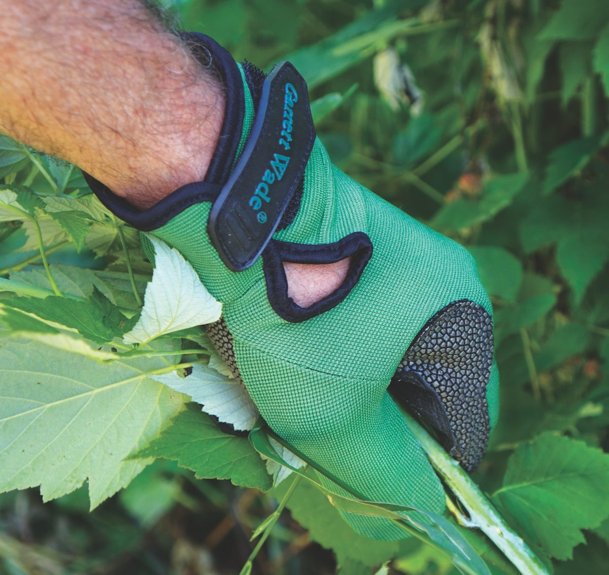 Gardening gloves protect hands from sharp thorns.
