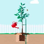 5 Essential Steps for Tree Planting Success