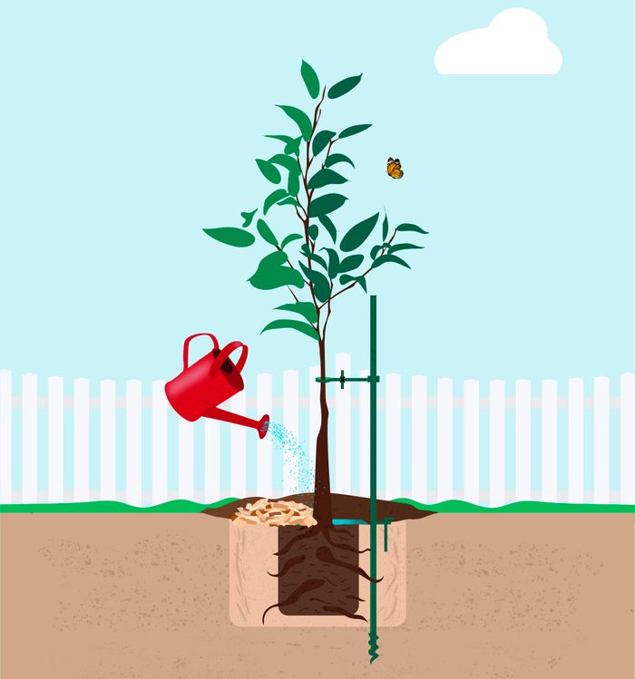 An illustration of a newly planted tree.