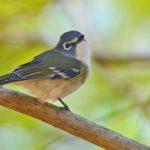 How Do Birds Get Their Names? (And Our Favorite Bird Nicknames)