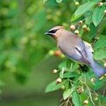 6 Perennial Plants With Year-Round Bird Benefits