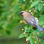 6 Perennial Plants With Year-Round Bird Benefits