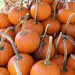 Recycling Pumpkins for Birds and Wildlife