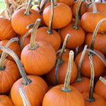 4 Garden Uses For Your Old Jack-o-Lantern