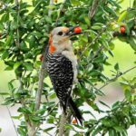 7 Backyard Birds That Eat Berries