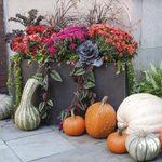 9 Fun Fall Outdoor Container Ideas