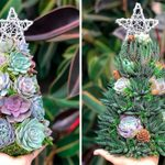 Succulent Christmas Trees Are the CUTEST New Christmas Decoration—Here's Where to Find Yours