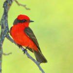 Coast to Coast Birding Hotspots for Every Season