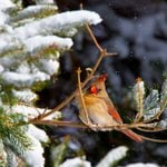 How to Create Winter Shelter for Birds