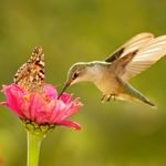 Where Do Hummingbirds Migrate in Winter?