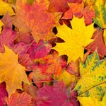 The 30 Best Small Towns for Fall Foliage
