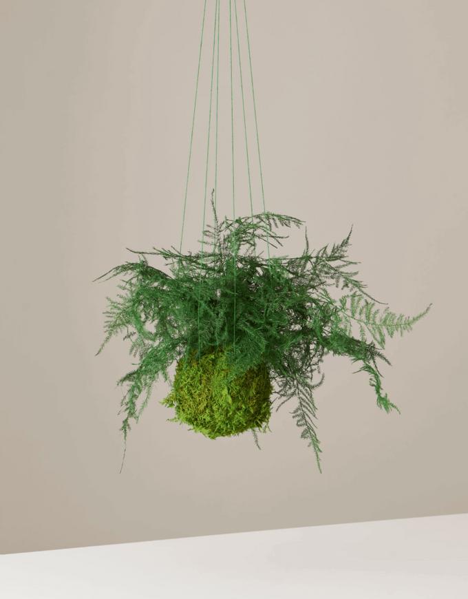 preserved fern plant