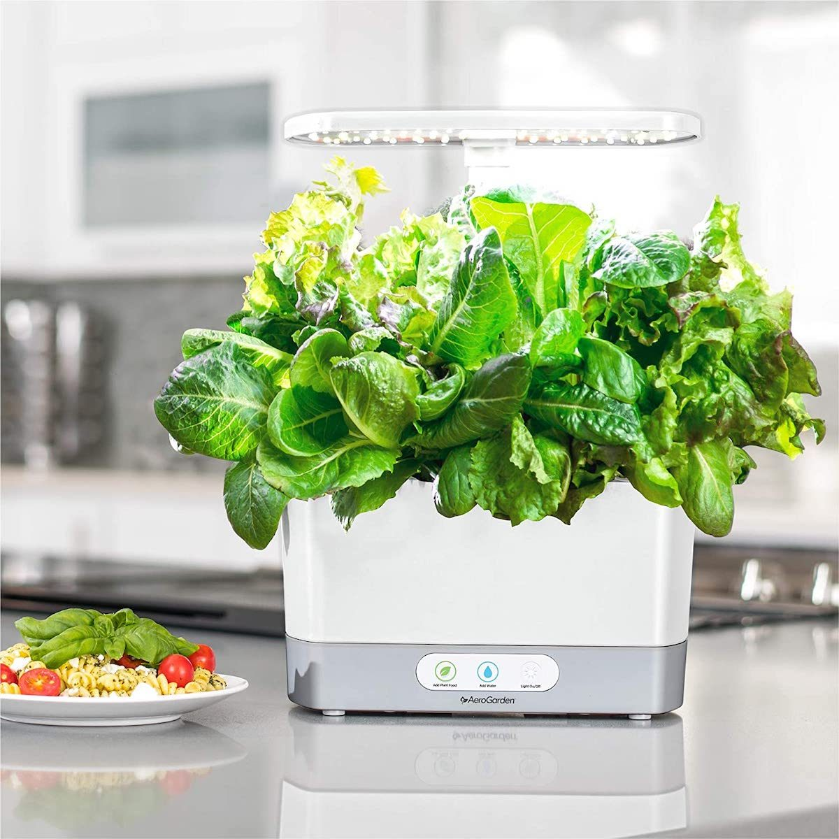 aerogarden salad kit