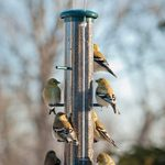 Choose the Best Nyjer Feeders to Attract Finches