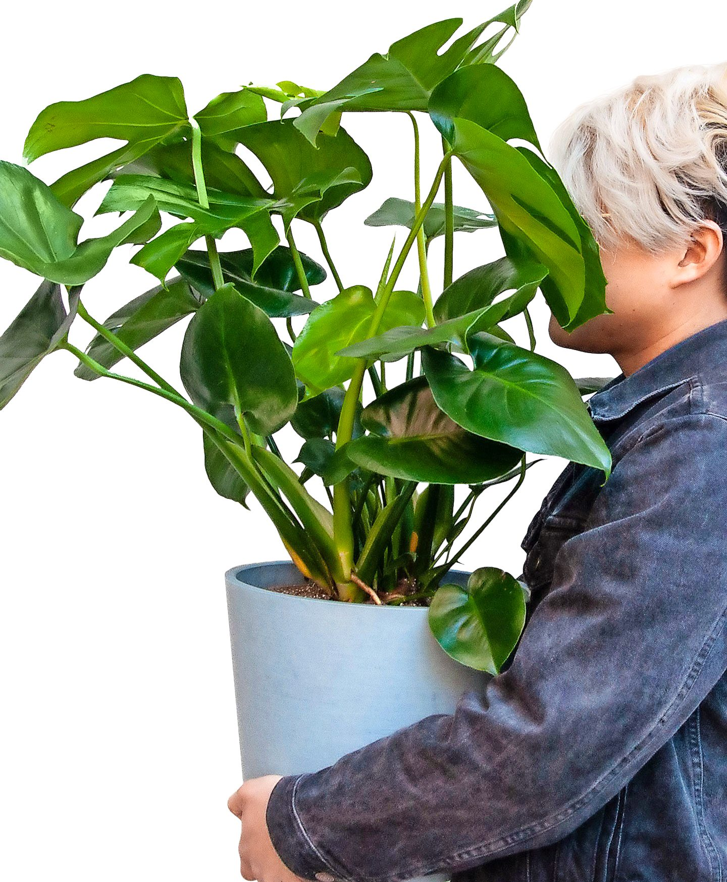 A person carries a large monstera plant.