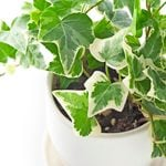 Top 10 Best Houseplants for Low Light